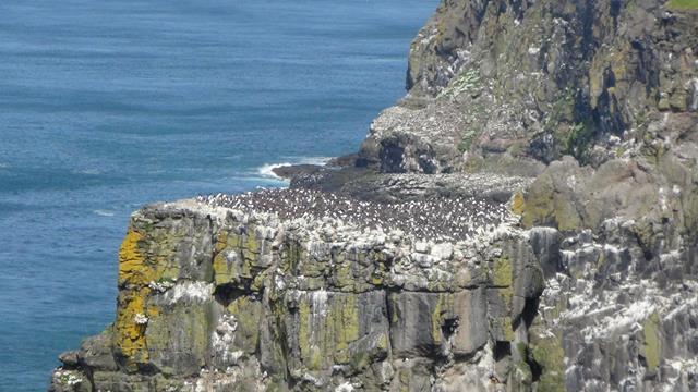 Honderden vogels op de rots!