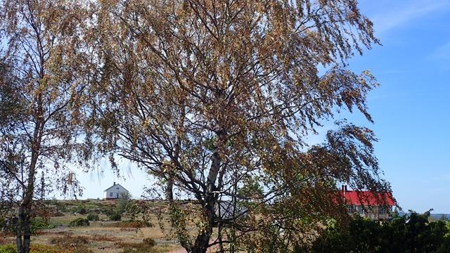 In juli al bomen in herfsttooi