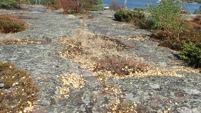 De bladeren vallen al